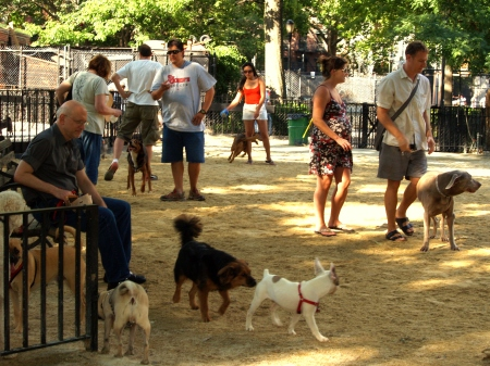 Tompkins Square Big Dog Run (photo courtesy of Wikimedia Commons)