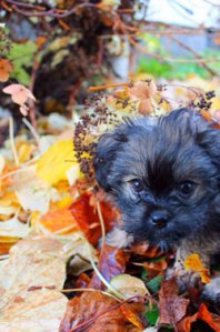 puppy_leaves