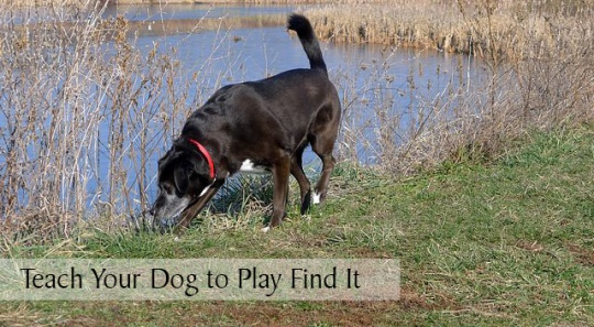teach-your-dog-to-play-find-it