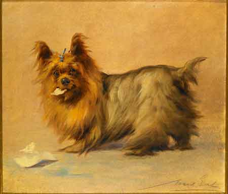 """Yorkshire Terrier"" © Maud Earl"
