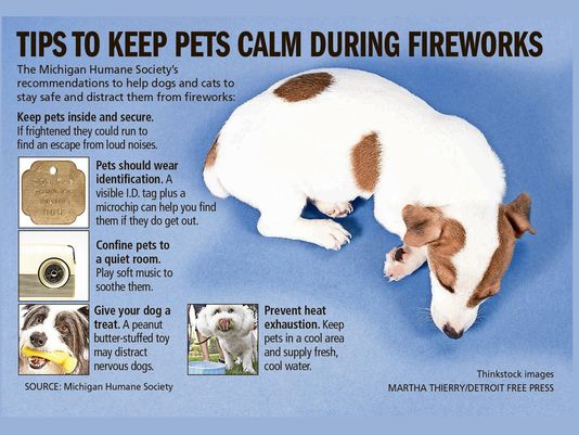 Keep Pets Calm During Fireworks