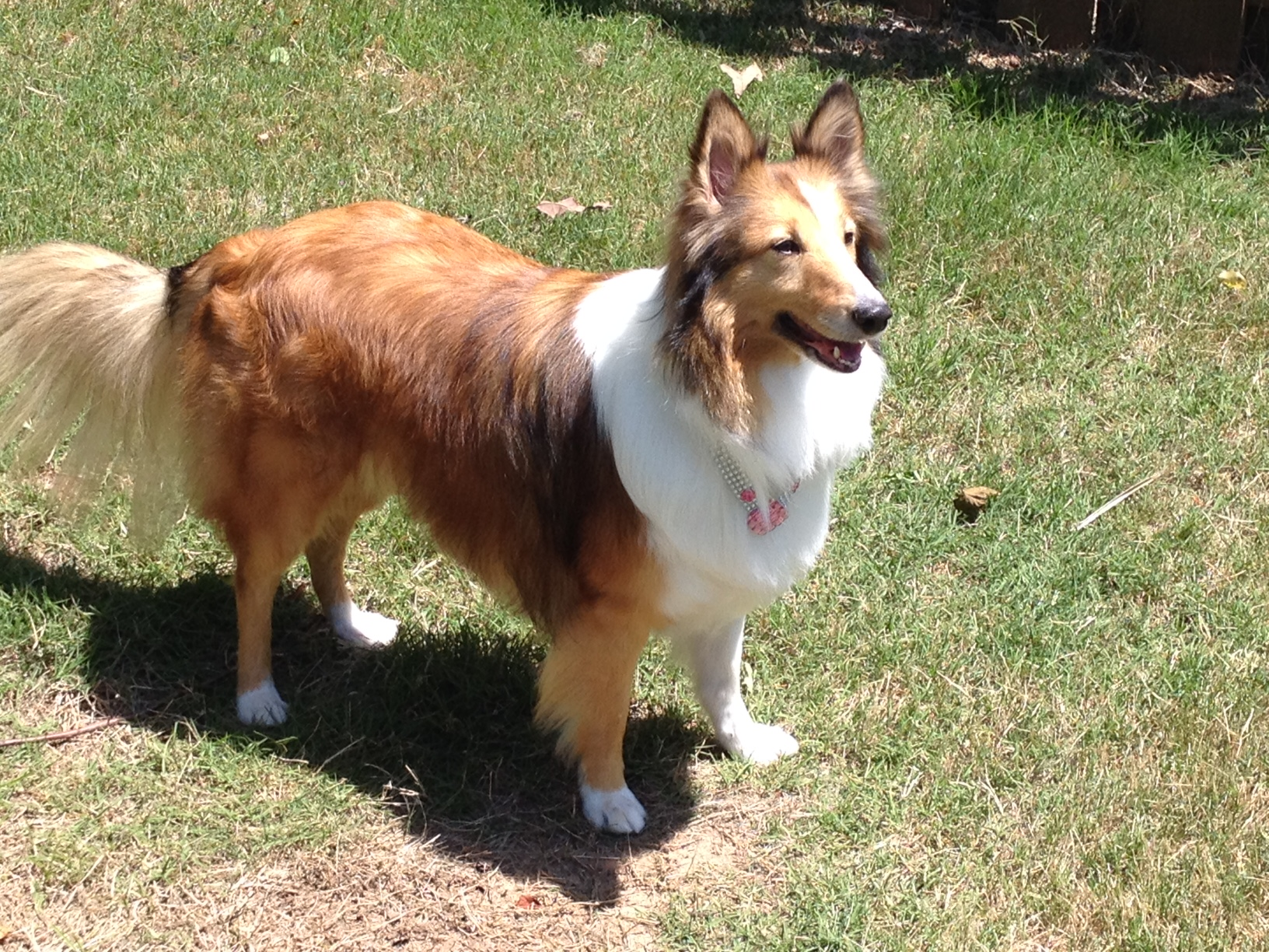 """waterside boarding kennels 4 days ago  she'll lock eyes on the target, lunge, and generally appear to warn off the other  dog with fierce """"don't come over here"""" barking this happens."""