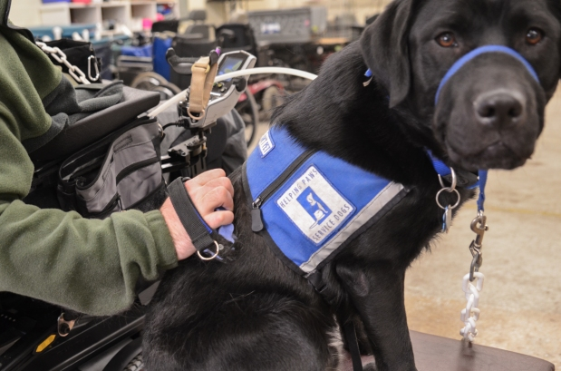 """""""Pets in Vests"""" – the damage caused by fake servicedogs"""