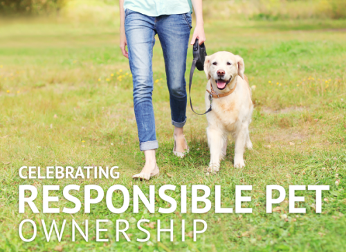 akc-responsble-pet-ownership